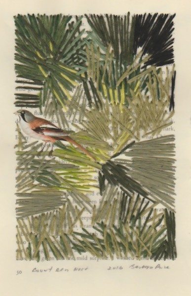 """""""Bouwt een Nest"""" by Barbara Price, 2016 (cotton line on paper, 4.25″ x 7″)"""